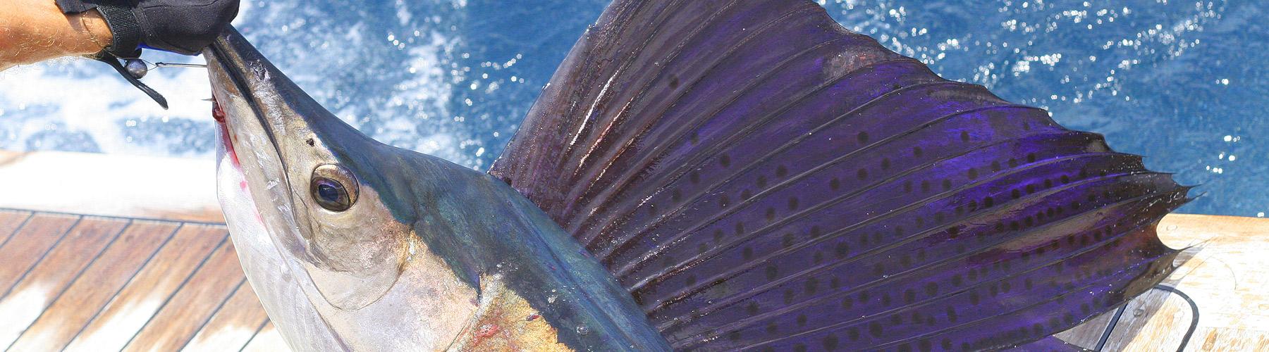 Gulfstream Fishing Charters